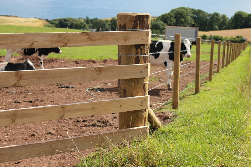 Top 8 Cattle Fences   Reviews & Advice For August 2019