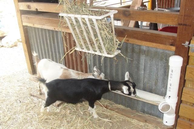 12 Best Goat Feeders Must Read Reviews For November 2020