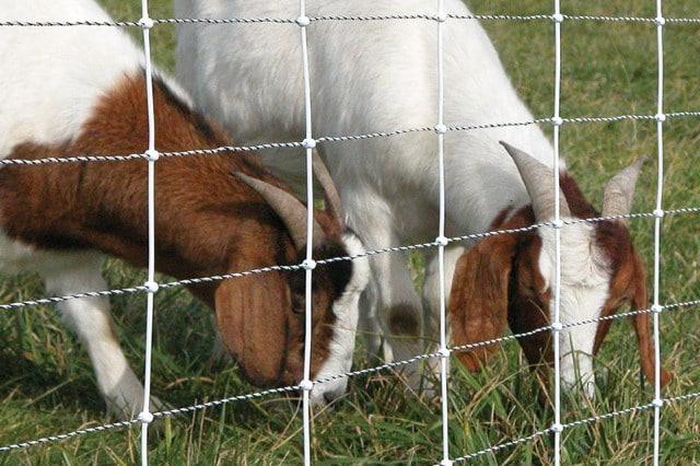 Top 14 Goat Fences | Reviews & Advice For September 2019